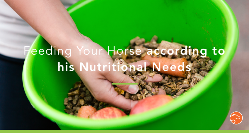 Horse_nutritional_needs