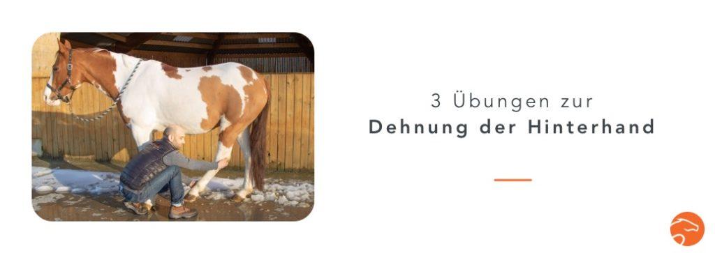 Dehnübungen_Pferd_Hinterhand