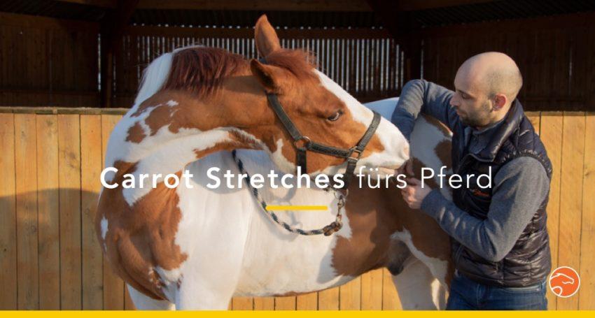 Dehnübungen_Pferd_Titel