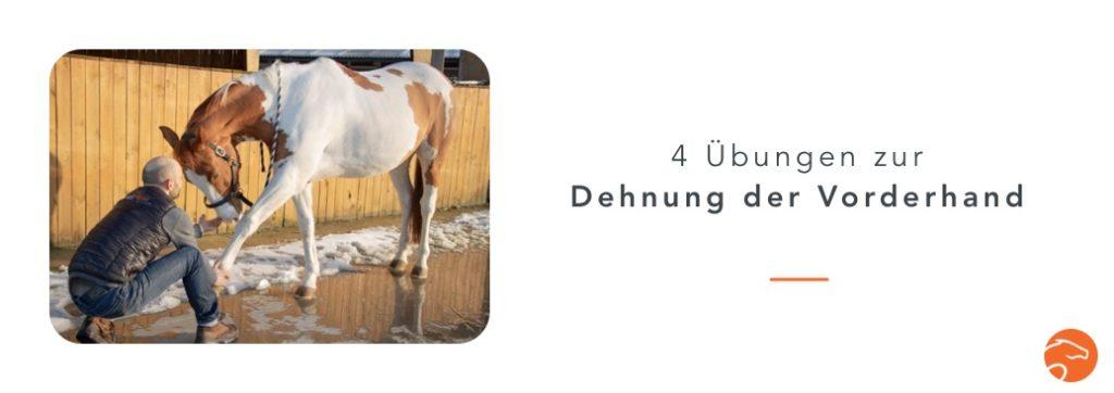 Dehnübungen_Pferd_Vorderhand