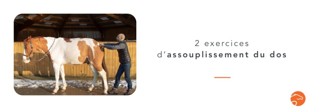 exercices d'assouplissement du dos de son cheval