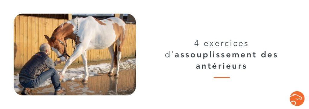 exercices d'assouplissement des antérieurs de son cheval