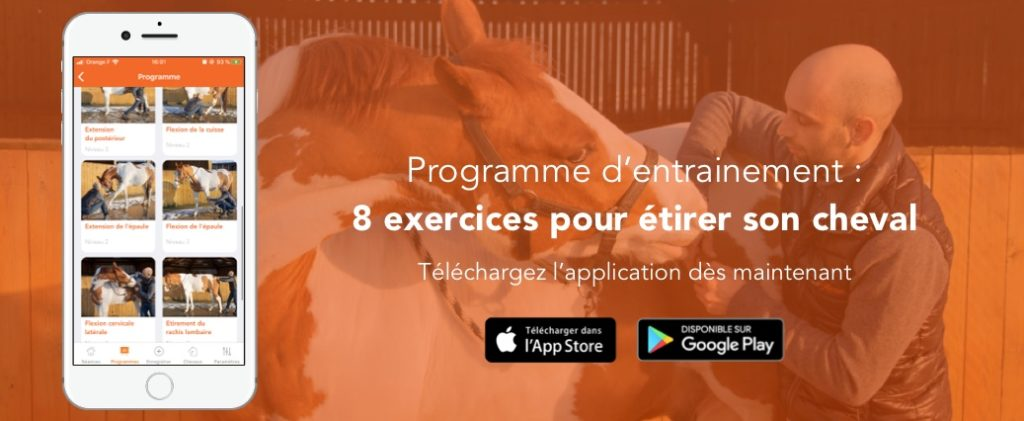 programme d'exercices d'assouplissement de son cheval sur l'application equisense