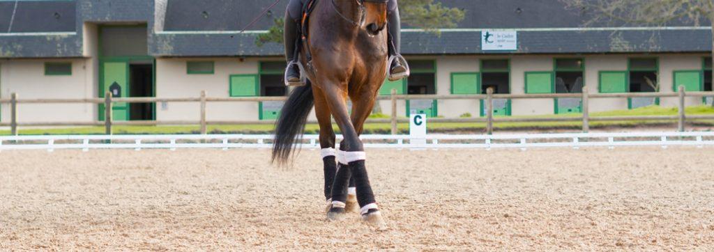 Appuyer au pas pour travailler la musculation du cheval en dressage
