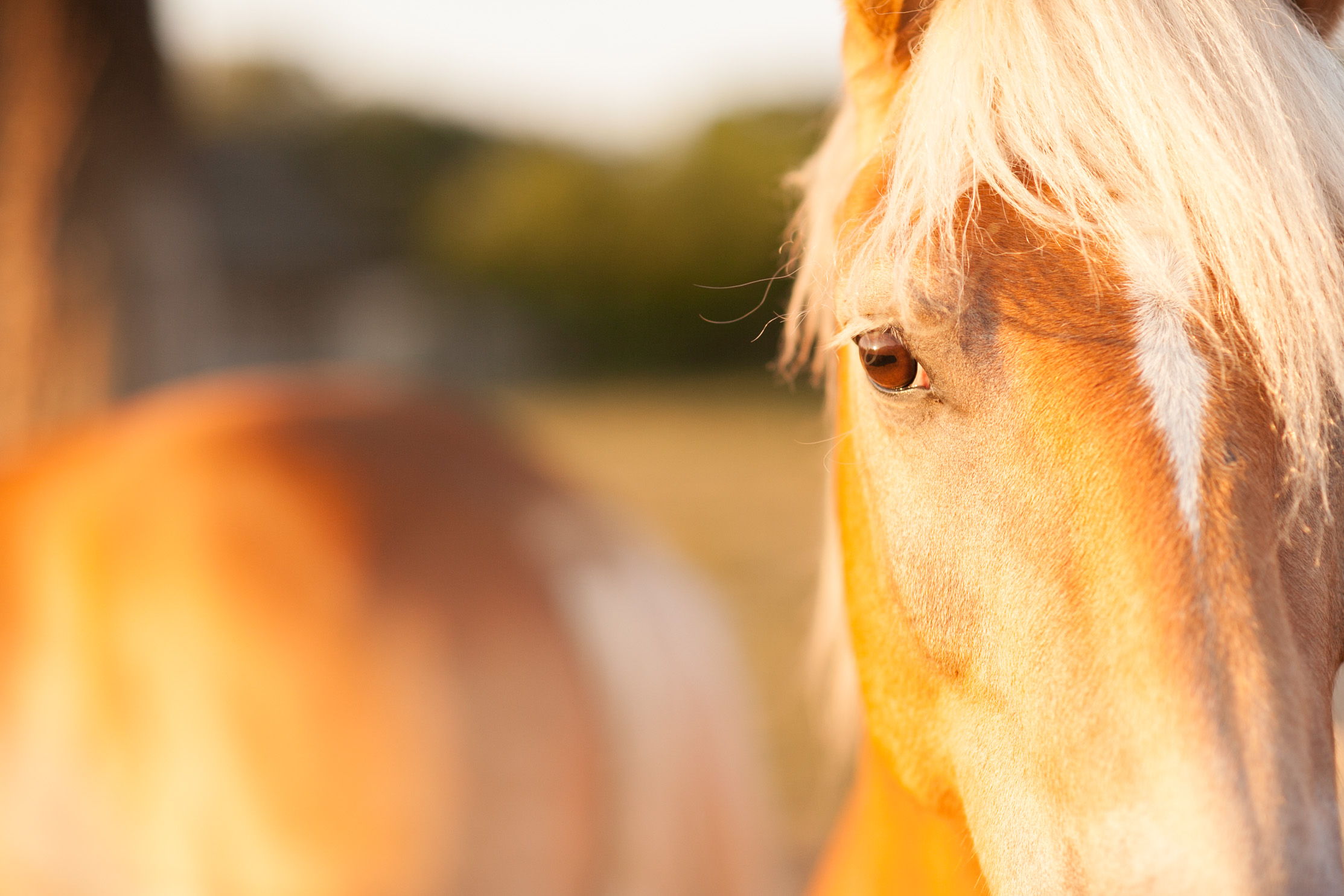 3 facteurs de stress à prendre en compte chez le cheval