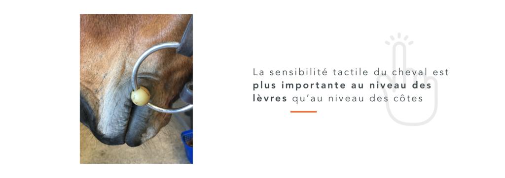 sensibilité tactile lèvres cheval 5 sens