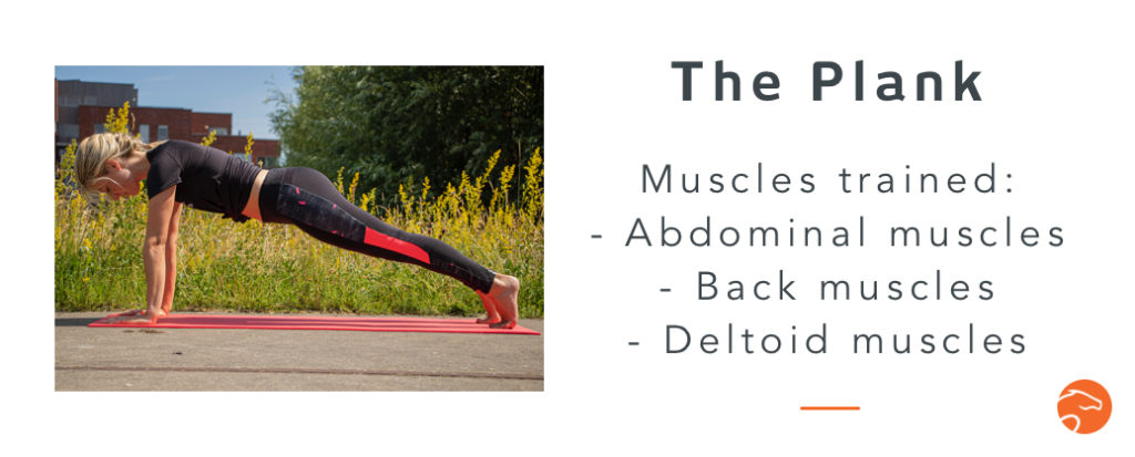 the plank, a good strength training exercise for riders