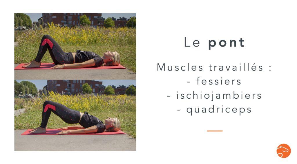 exercices de musculation spécial cavalier le pont
