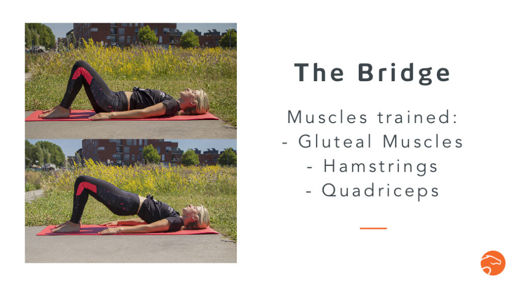 the bridge, a good strength training exercise for riders