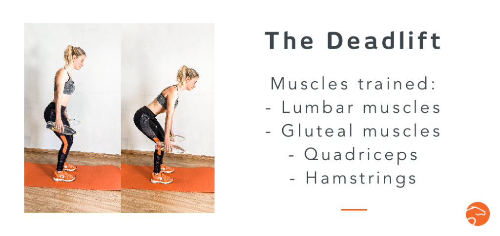 the deadlift, a good strength training exercise for riders