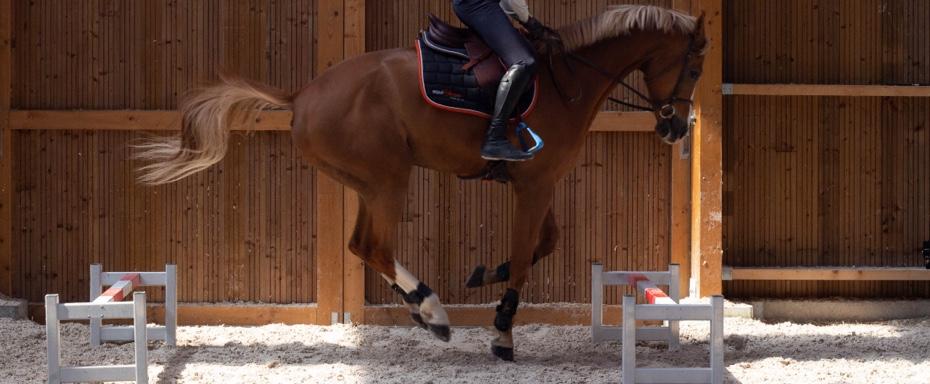 la flexion du dos et l'engagement des postérieurs sur les sauts de puce sont bien visibles sur cette photo
