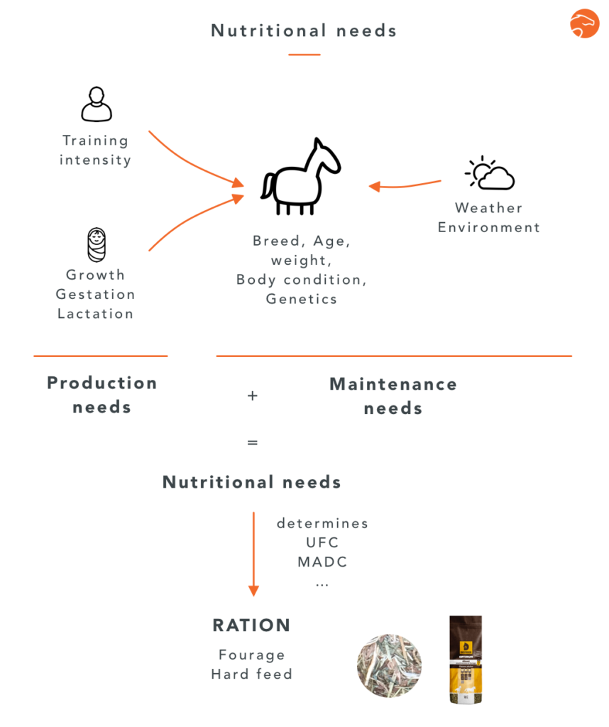 how to calculate one's horse's ration and nutritional needs