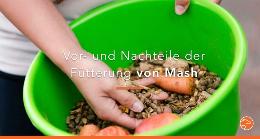 Mash Vorteile und Nachteile in der Fütterung