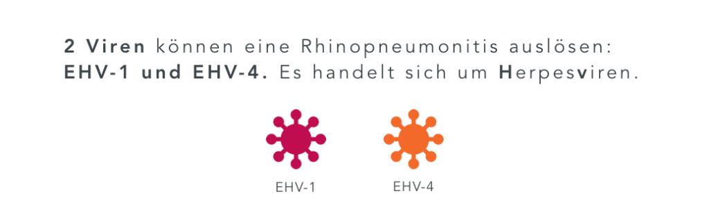 EHV Formen Viren