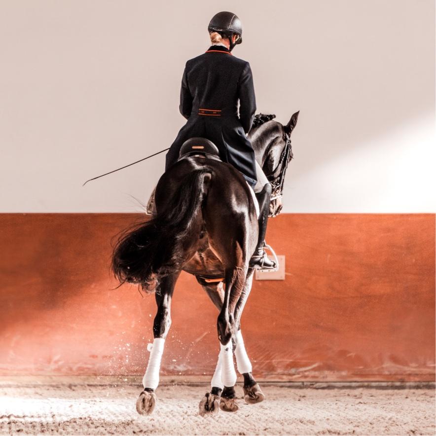 appuyer au trot à droite avec abaissement de la hanche déplacements latéraux cheval