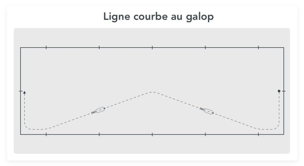 ligne courbe au galop un bon exercice de dressage pour gagner en contrôle