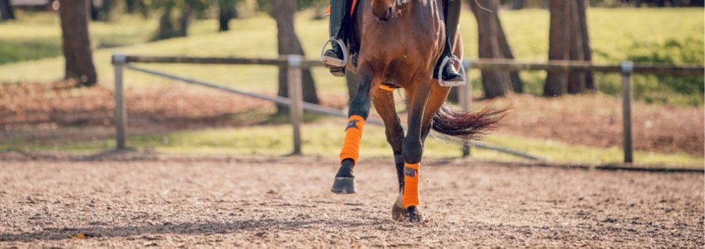 cheval qui allonge exercice de dressage pour gagner en contrôle