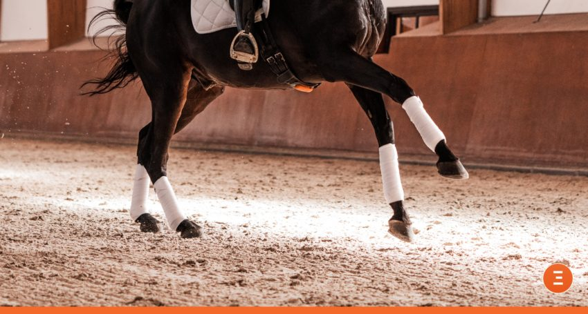 leg change in canter