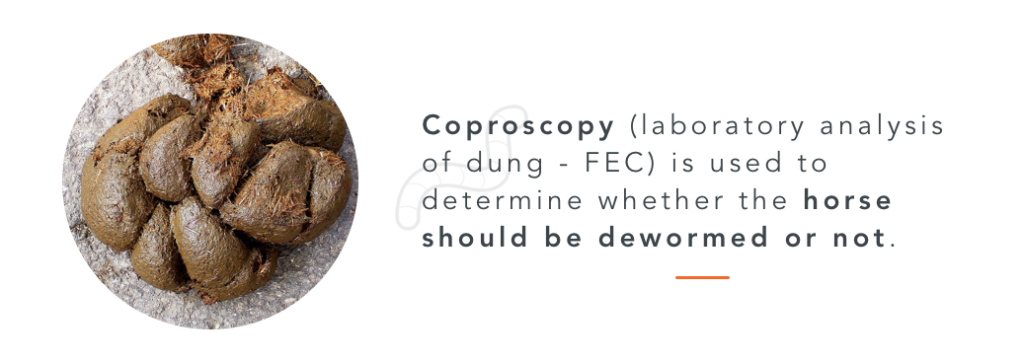 FEC, a technique to know if horses deworming is necessary